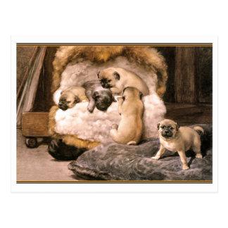 Pug Puppies Postcard
