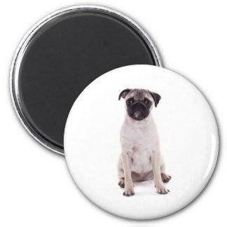 Pug puppy 6 cm round magnet