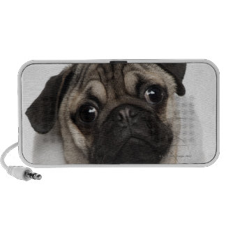 Pug puppy (6 months old) wearing a Christmas Mini Speakers