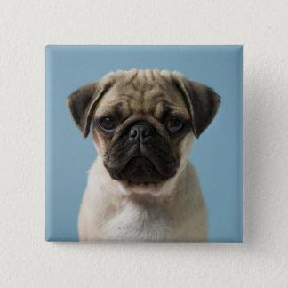 Pug Puppy Against Blue Background 15 Cm Square Badge