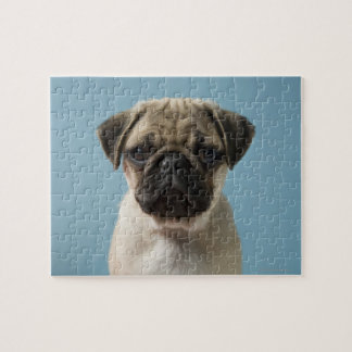 Pug Puppy Against Blue Background Jigsaw Puzzle
