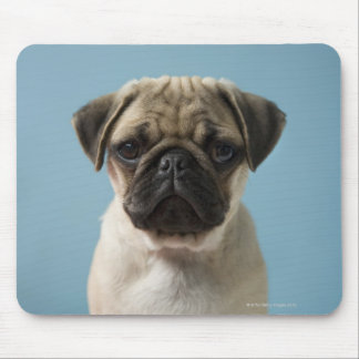 Pug Puppy Against Blue Background Mouse Pad