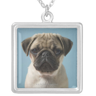 Pug Puppy Against Blue Background Silver Plated Necklace