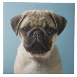 Pug Puppy Against Blue Background Tile