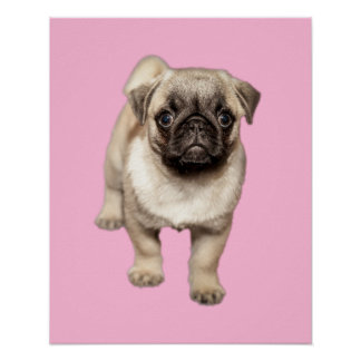 Pug Puppy Custom Background Color Poster