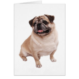 Pug Puppy Dog Blank Greeting  Note Card