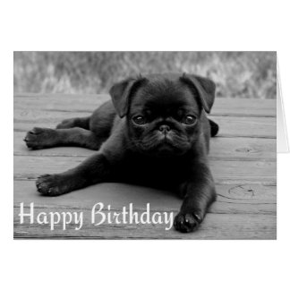 Pug Puppy Dog Happy Birthday Card - Black & White