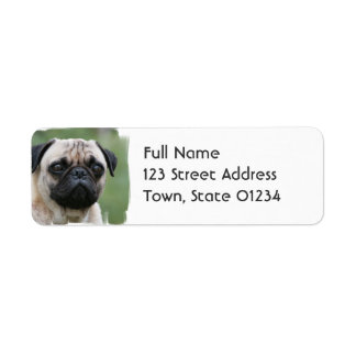 Pug Puppy Dog Mailing Label