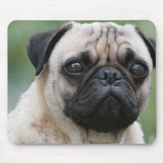 Pug Puppy Dog Mouse Pad