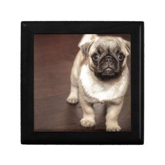 Pug Puppy Gift Box