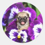 Pug puppy in pansies round sticker