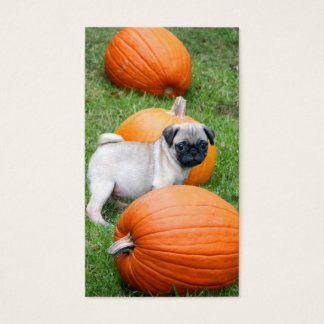 Pug puppy in pumpkins business cards