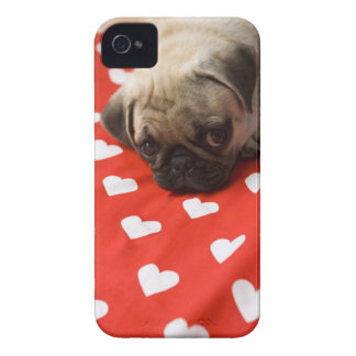 Pug puppy lying on bed, close up iPhone 4 Case-Mate case