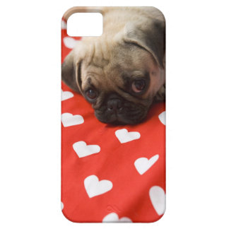 Pug puppy lying on bed, close up iPhone 5 case