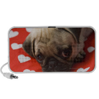 Pug puppy lying on bed, close up mp3 speaker