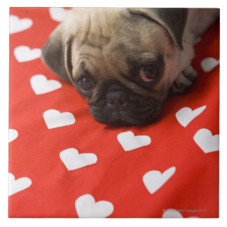 Pug puppy lying on bed, close up tile