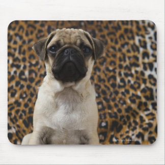 Pug puppy sitting against animal print 2 mouse pad