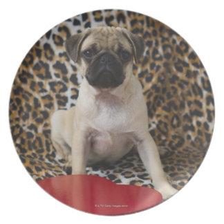 Pug puppy sitting against animal print dinner plate