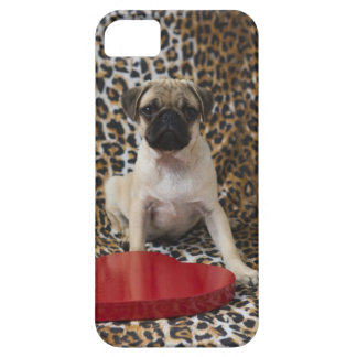Pug puppy sitting against animal print iPhone 5 cover
