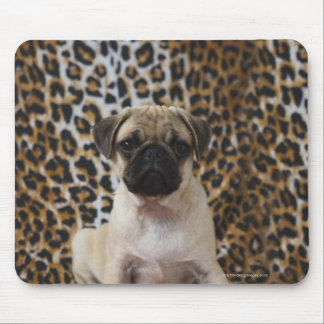 Pug puppy sitting against animal print mouse pad