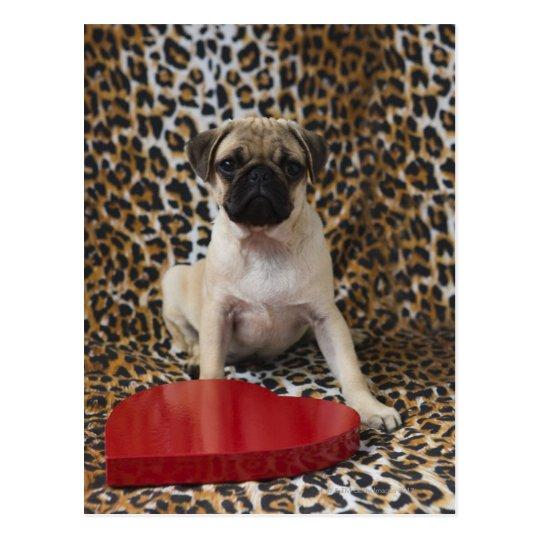 Pug puppy sitting against animal print postcard