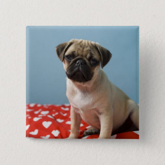 Pug puppy sitting on bed 15 cm square badge