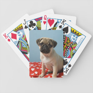 Pug puppy sitting on bed bicycle playing cards