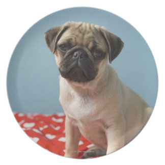 Pug puppy sitting on bed dinner plate