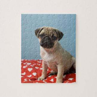 Pug puppy sitting on bed jigsaw puzzle