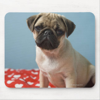 Pug puppy sitting on bed mouse pad
