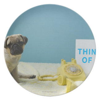 Pug puppy sitting on bed next to phone and dinner plate