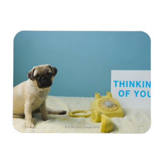 Pug puppy sitting on bed next to phone and magnet