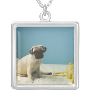 Pug puppy sitting on bed next to phone and silver plated necklace