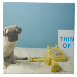 Pug puppy sitting on bed next to phone and tile
