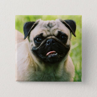 Pug Puppy Square Pin
