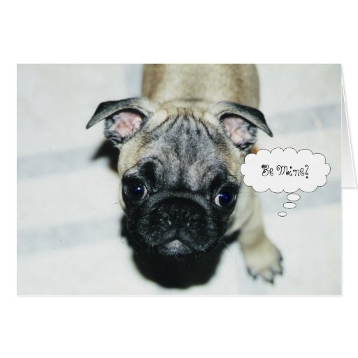 Pug Puppy Valentine's Day Greeting Card #1