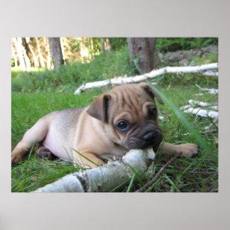 Pug/Sharpei Puppy Print