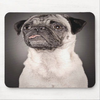 Pug Standing Up and Attentive with Tongue Out Mouse Pad