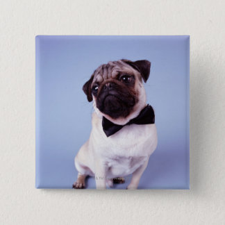 Pug wearing bow tie, close-up 15 cm square badge