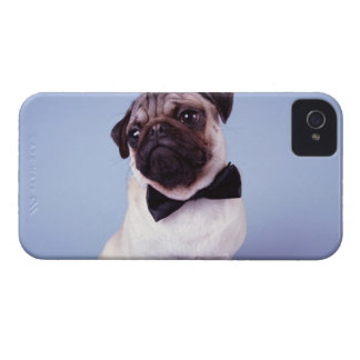 Pug wearing bow tie, close-up iPhone 4 case
