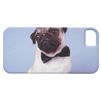 Pug wearing bow tie, close-up iPhone 5 covers