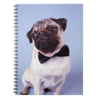 Pug wearing bow tie, close-up notebook