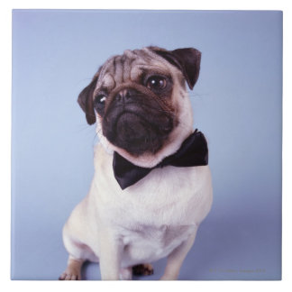Pug wearing bow tie, close-up tile