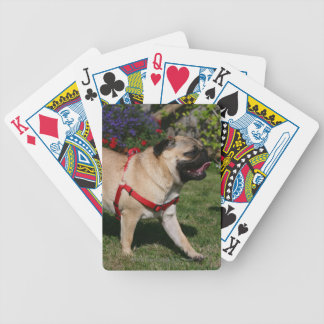 Pug Wearing Red Harness Bicycle Playing Cards