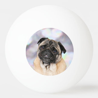Pug - Willy Ping Pong Ball