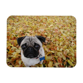 Pug with Leaves Photo Vinyl Magnets