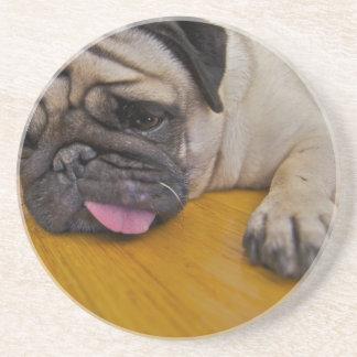 Pug with One Too Many Coasters
