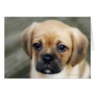 Pugalier Puppy Looking at Camera Card