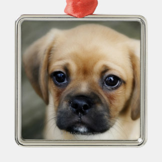 Pugalier Puppy Looking at Camera Christmas Ornament