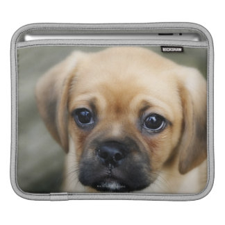 Pugalier Puppy Looking at Camera iPad Sleeves